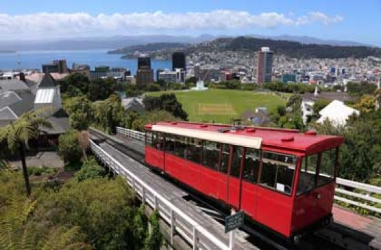 Wellington City and Bays Tour (afternoon)