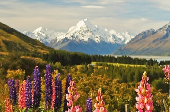 Mount Cook Day Tour Christchurch to Christchurch